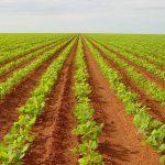 Agricultura no Brasil é a quarta que mais polui no mundo
